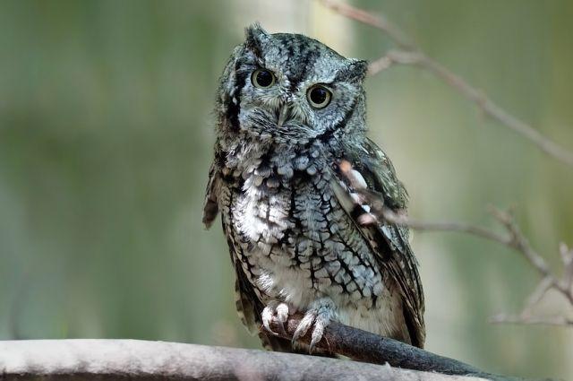 Специалисты рекомендуют обращать внимание на поведение птицы, прежде, чем бросаться на помощь.
