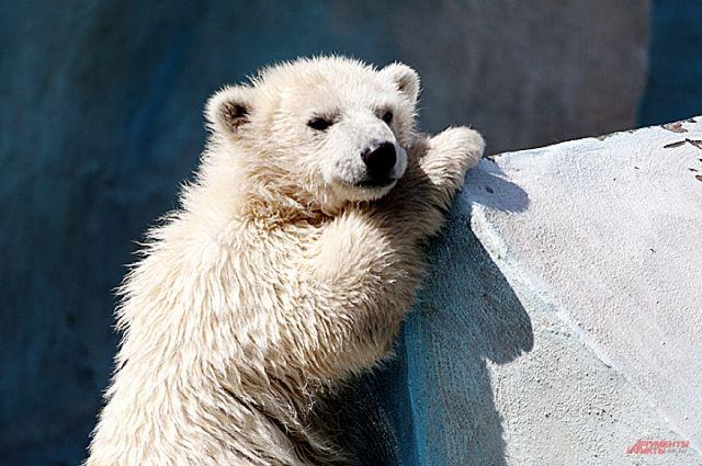 Маленькие жители Новосибирска смогут 1 июня посетить зоопарк бесплатно