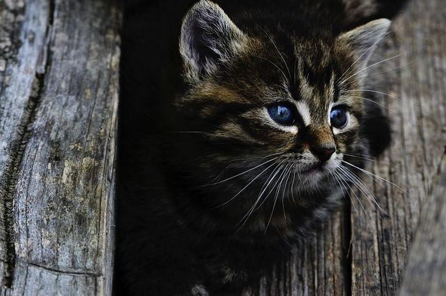 Новосибирские пожарные пристроили трех котят, которых нашли на дороге