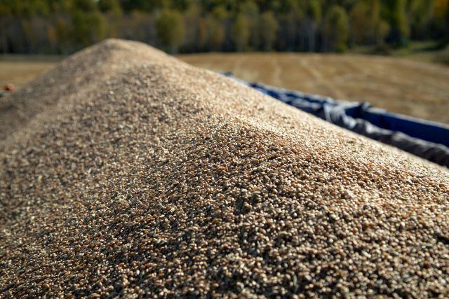 «Подымайся ты, рожь золотая»: сибирские зерновики создают консорциум