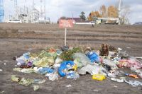 В Ноябрьске рядом с жилыми домами обнаружили тушки мертвых птиц