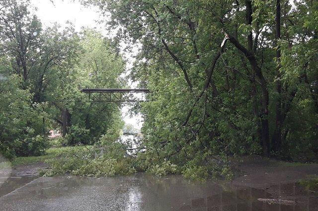 Дерево перегородило дорогу в микрорайоне Комсомольский.