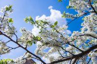 В первую половину месяца ожидается быстрая и частая смена погодных условий.