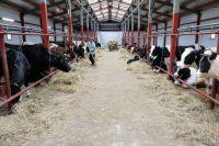Проект строительства животноводческого племенного комплекса в с. Пыёлдино на 1200 голов крупного рогатого скота признали эффективным и целесообразным.