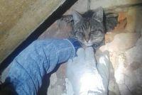 Разобрав часть кирпичной стены, спасатели извлекли животное, которое передали в руки хозяйки.