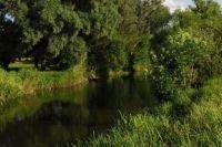 На территории Погребищенского района погибла рыба и другие обитатели водоемов.