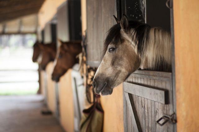 В Тюмени подростки пытались скрыться от полиции на лошадях