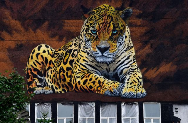 Леопарда на стене ДВФУ снесли со зданием. Нарисуют нового?