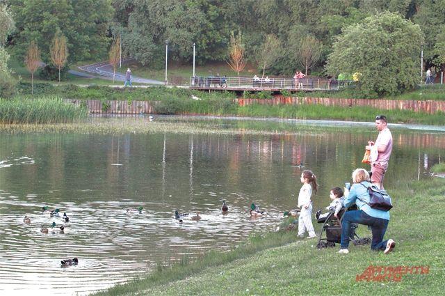 Берега пруда благоустраивают  по программе «Мой район».