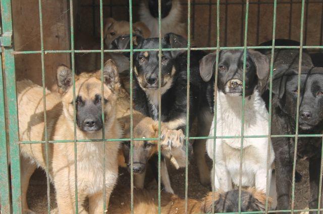 Тюменские студенты расскажут школьникам, как работают приюты для животных