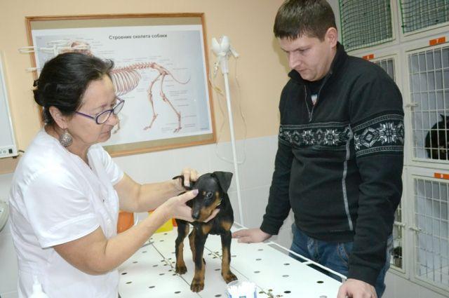 Внимательно подходите к выбору ветеринара, чтобы не сделать питомцу хуже.