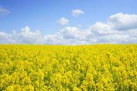 В эти выходные будет и тепло, и дождливо. На севере синоптики обещают даже грозы с ливнями.