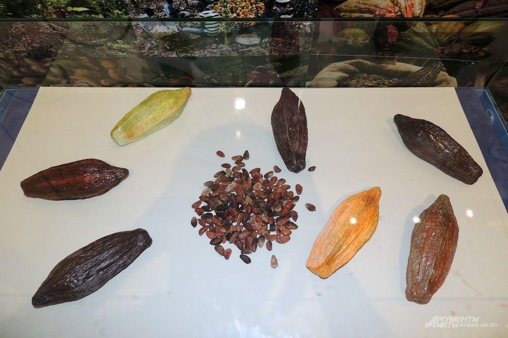 Какао-бобы - семена шоколадного дерева.