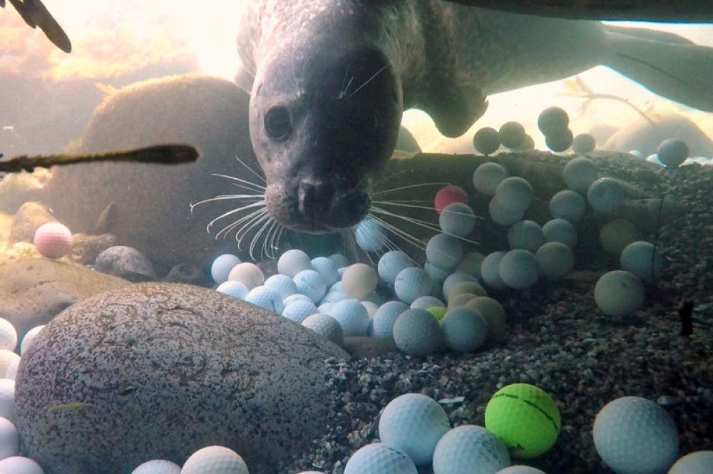 Потерянные мячи для гольфа на дне бухты Стиллуотер в Тихом океане возле голф-клуба «Пеббл-Бич Гольф Линкс», Калифорния, США.