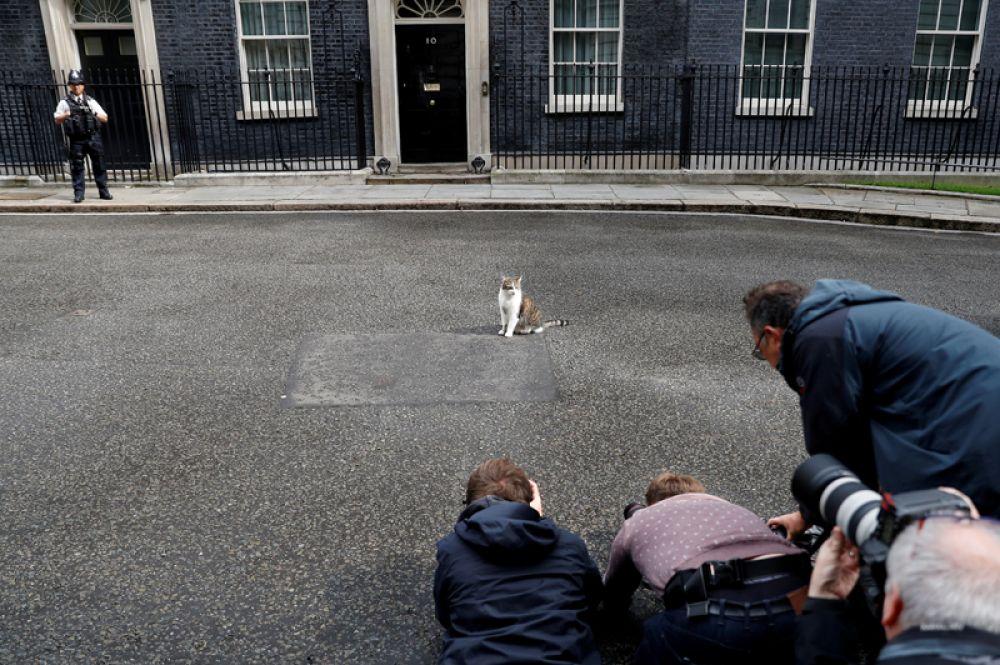 Корреспонденты фотографируют кота Ларри возле резиденции британских премьеров на Даунинг-стрит в Лондоне, Великобритания.