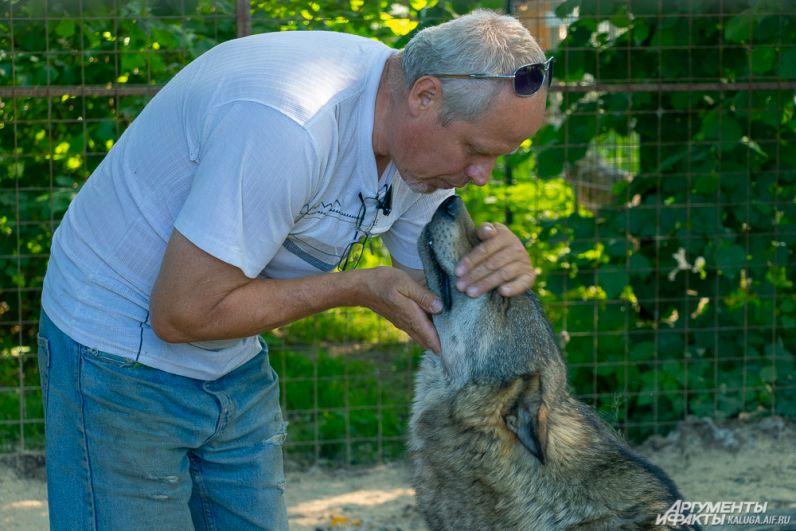 Сергей Клочек (муж Вероники Матюшиной) без опаски входит в вольер к волкам - те уважают его, считая старшим..