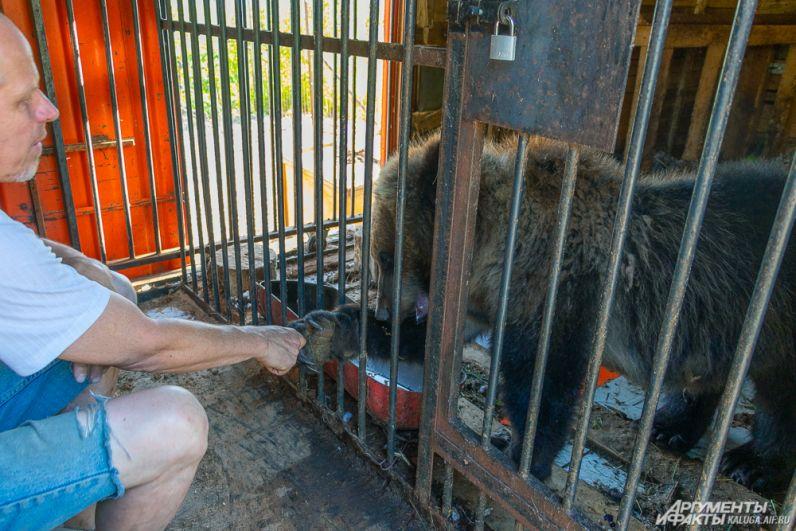 Медведица Маша появилась в центре реабилитации в прошлом году. Переехать животному помогали калужане.