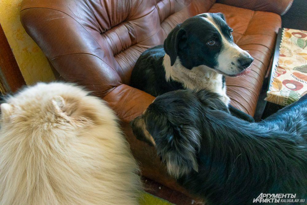 Собака Виля, меланхолично наблюдающая за остальными, по словам Вероники, занимается воспитанием волков центра.