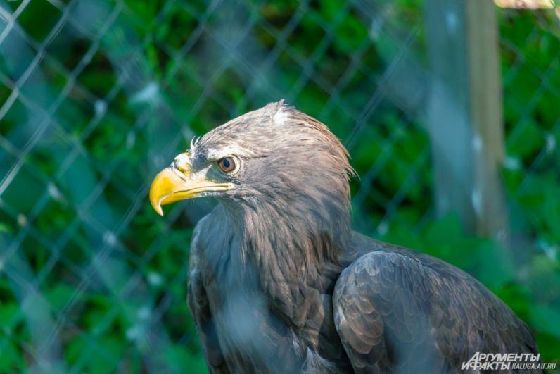 Хищная птица долгое время служила фотографу и теперь не любит съемочную технику и детей.