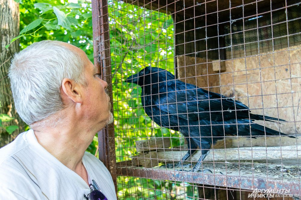 От ворона Миши отказалась хозяйка, которая не смогла сладить с нравом умной птицы.
