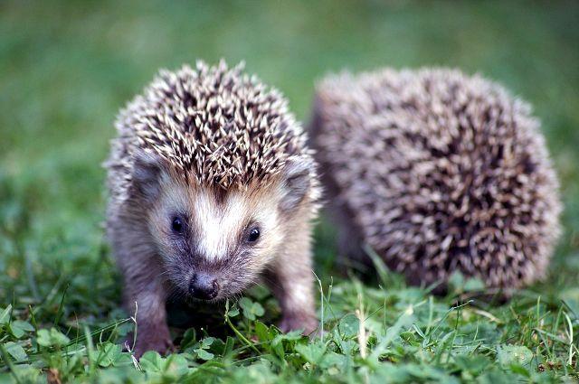 Специалисты рекомендуют обращать внимание на поведение животного, прежде чем бросаться на помощь.