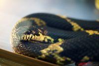В Украине открыли первую ферму, где выращивают съедобных змей