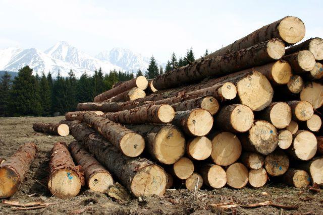 Проблемы в лесной отрасли Красноярского края начались в 90-х годах