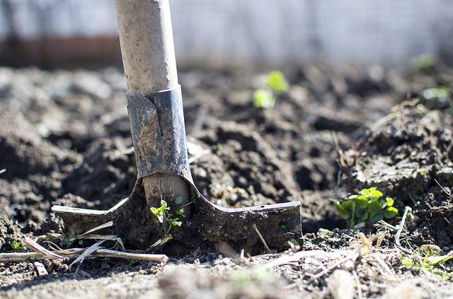 Раскопки будут проводиться до середины лета.