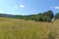 Земля заросла сорной травой - пыреем, бодяком, полынью, коноплей, деревьями и кустарниками, которые заняли половину площади