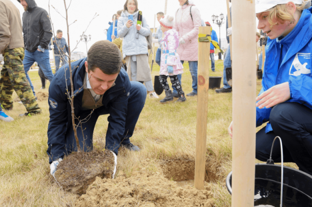 В Салехарде возле парка Победы высадили 300 саженцев березы