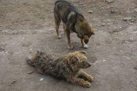 Ответственность за выгул собак без намордника и поводка самара