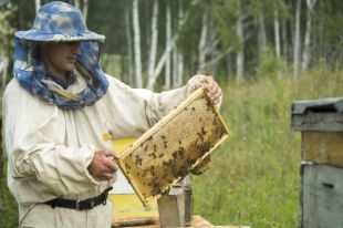 В Приангарье до трети пчелосемей гибнет за зиму.