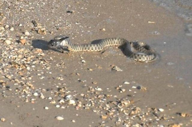 На пляже и в туалетах: жители Одессы сообщают о настоящем нашествии змей