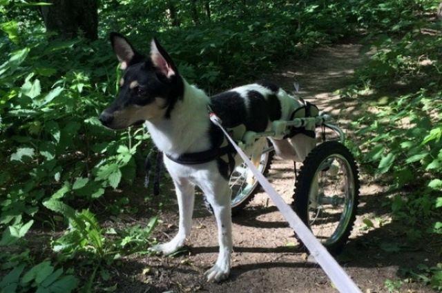 Бублик - собака с очень тяжёлой судьбой, которую искалечил человек и оставил умирать