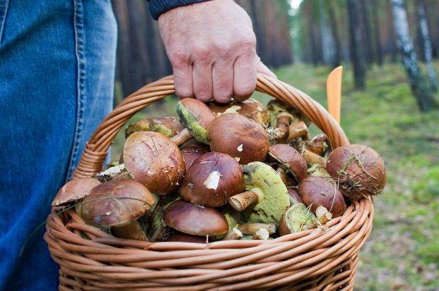 В ведре грибника - и белые грибы, и подберезовики, и маслята.