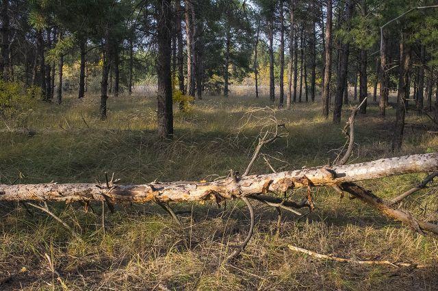 Общественники  обратились с заявлением в природоохранную прокуратуру.