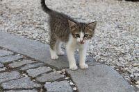 Наиболее чувствительными к болезни считаются котята и кошки в возрасте до 2 лет.
