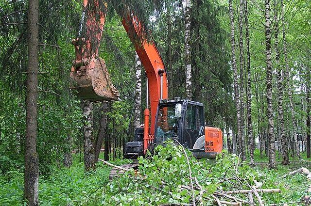 Вместо срубленных деревьев высадят новые кустарники и крупномерные деревья.