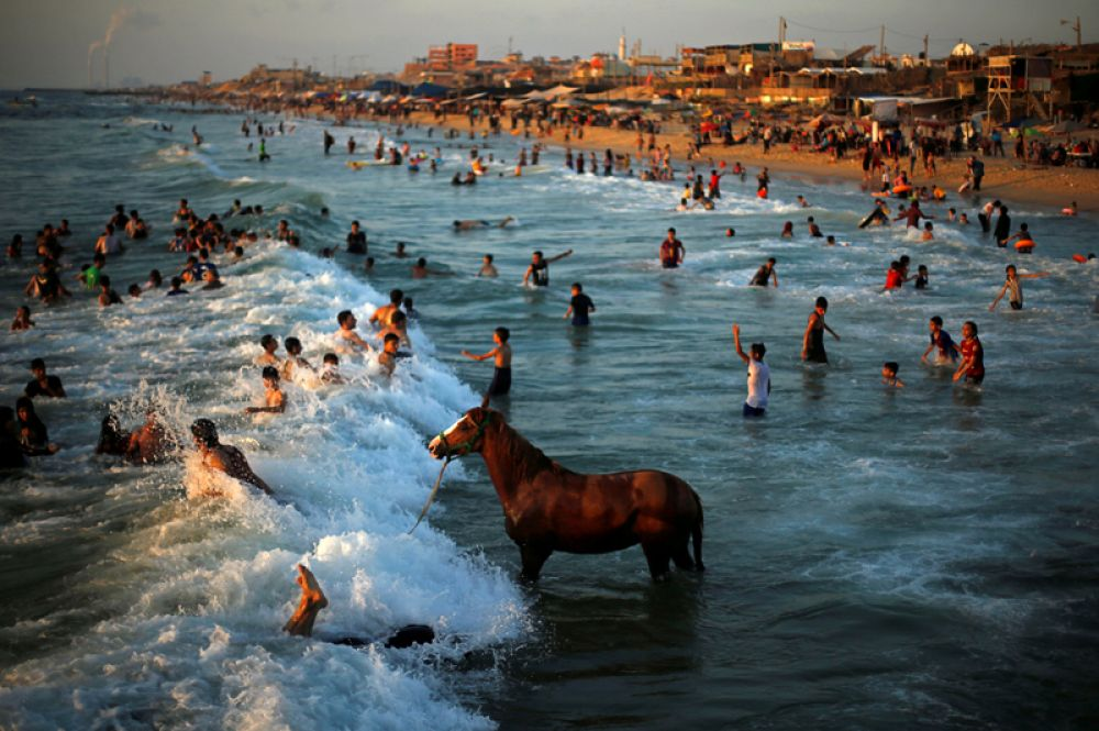 Палестинец купает свою лошадь в жаркий день в северной части сектора Газа.