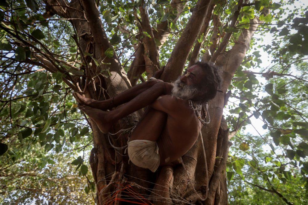 Садху практикует йогу на дереве в преддверии Международного дня йоги, Индия.