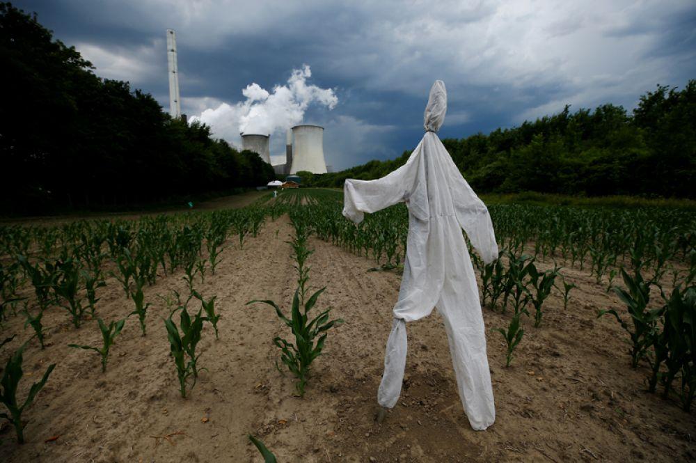 Чучело на кукурузном поле перед угольной электростанцией Neurath немецкой компании RWE в Нойрате к западу от Кельна.