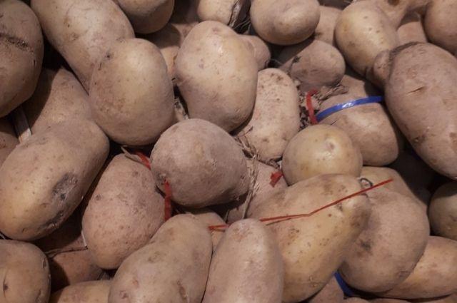 На Ямале практически завершили посадку картофеля