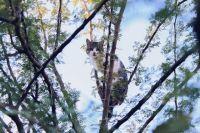 Поэтому при обнаружении кошки на дереве лучше обратиться к специалистам, у которых есть навыки подобной работы и  специальное оборудование для ее успешного проведения.