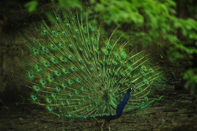 В Ноябрьске появится уникальный биолого-экологический центр