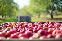 Хороший урожай - результат заботы и труда