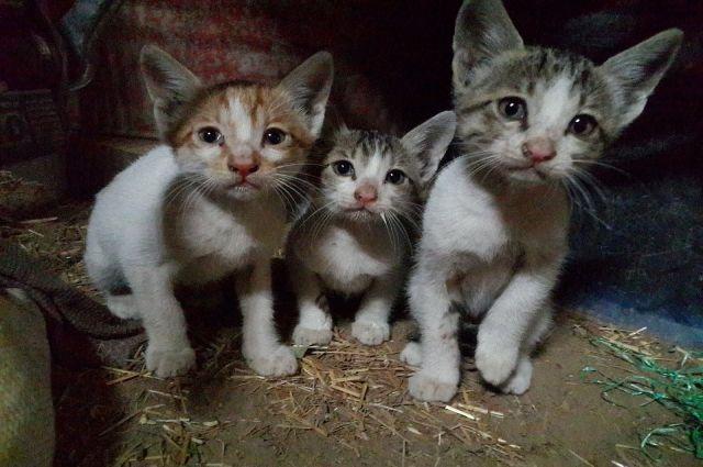 Если котят никто не приютит, они погибнут.