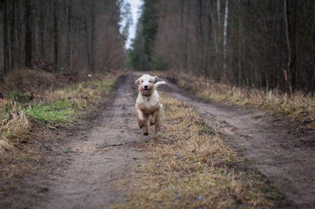 В Тобольске 70 собак из приюта могут оказаться на улице