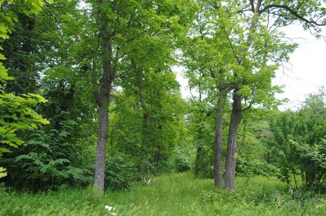 Пропавший без вести в лесу подросток-инвалид найден живым
