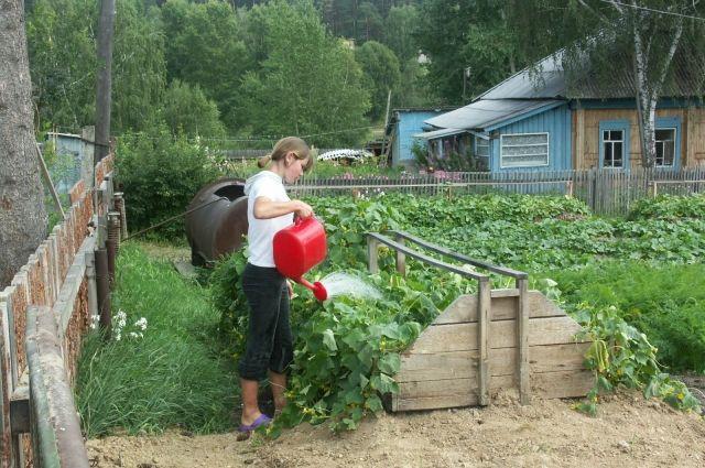От полива зависит, как будут расти наши посадки