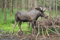 Ущерб от действий тюменских браконьеров составил почти 12 млн рублей